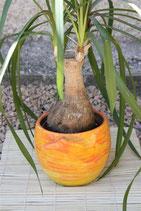 Cache pot à orchidée avec bas relief