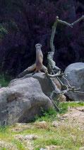 Kölner Zoo - De dierentuin van Keulen