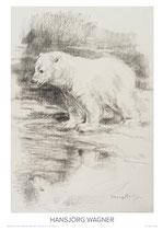 junger Eisbär mit Wasserspiegelung - III - KUNSTPOSTER DIN A2