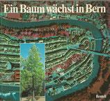 Ein Baum wächst in Bern