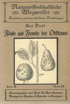 Feinde und Freunde des Obstbaues 1911