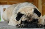 Video 6: Übergewicht bei Hunden