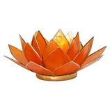Lotus Licht Lebensfreude