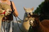 Jahreszeiten Wanderung, 2 Personen - 1 Alpaka