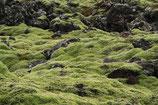 Isländisch Moos BIO geschnitten