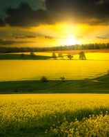 YELLOW SUNSET BY OLIOPTIC-FOTO-PUZZLE 1.000 TEILE