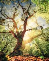 ZAUBERWALD BY OLIOPTIC-FOTO-PUZZLE 1.000 TEILE