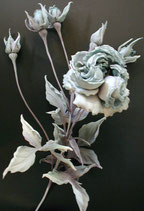 F-002 Столлистная роза Буллата /ローザ・コォンティファーリア・バルター / Rosa centifolia Bullata