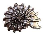 Gürtelschnalle Muschel 4,0 cm - Silber