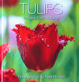 TULIPS - IMAGES FROM HOLLAND