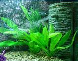 Ersatz Filterblock für Ecke Aquariumfilter Innenfilter G880