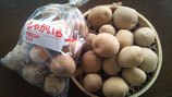 白土馬鈴薯