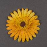 Blume Gerbera gelb