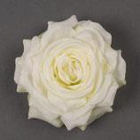 Blume Rose weiss
