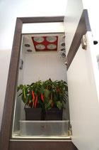 Urban Chili - die diskrete Growbox - Komplettset
