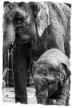 Elefanten Familie