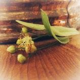 Eau florale de Tilleul