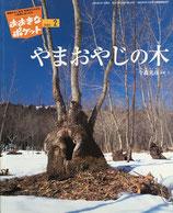 やまおやじの木 ひみつのたからチョコラーテ おおきなポケット143号