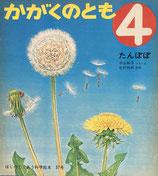 たんぽぽ 平山和子     かがくのとも37号