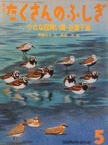 小さな四角い海・谷津干潟  たくさんのふしぎ254号