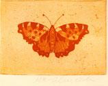 Mariposa grabado postal