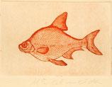 Pez naranja grabado postal
