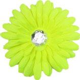 Yellow Daisy Doo