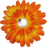 Orange Daisy Doo