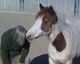 Einzelstunden 'Pferdegestütztes Lernen'