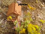 sedum palmeri - tallo 5cm