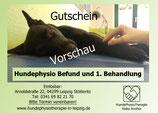 Hundephysiotherapie: Befund und erste Behandlung