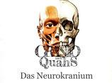Craniosacrale Osteopathie - Kurs 1: Neurokranium