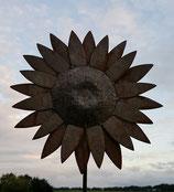 Sonnenblume Dream