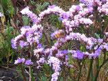 """Meine Bienen-Liebe """"Patenschaft über 1 Bienenvolk"""""""