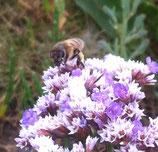 """Meine Bienen-Liebe """"Patenschaft über 4 Bienenvölker"""" für Firmen - die Bienen können an ihrem Firmensitz aufgestellt werden, wenn er im Umkreis von ca. 50 km um unseren Betriebssitz ist."""