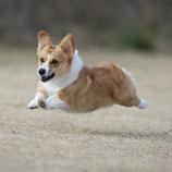 愛犬の飛行犬カレンダー