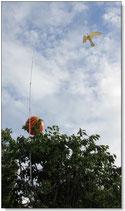 Hökattrapp Hawk-Kite inkl 13 m Al-teleskopstång
