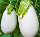 Aubergine Longue blanche