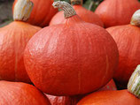 Potimarron orange (maxima)