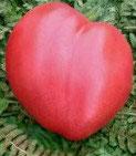 Cœur de Bœuf rose
