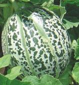 Melon Luneville