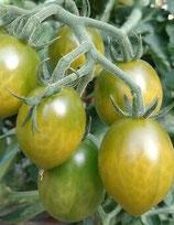 Prune Verte (tomate cocktail verte)