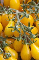 Poire Jaune (tomate cerise en forme de poire jaune)