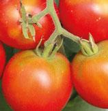 Précoce de quimper (petite tomate rouge précoce)