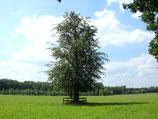 | Bäume stärken!