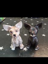 Chihuahua Pitti