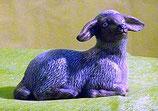 Schaf liegend rechts schauend