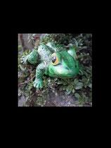 Frosch Nuko