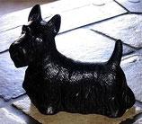 Terrier Mo Langhaar