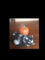 Kürbi die Halloween Katze